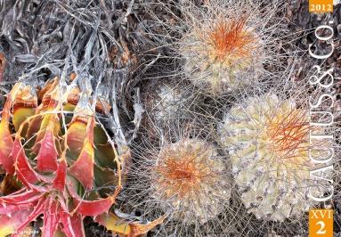 02. Due magnifici esemplari dal nord del Cile: Copiapoa superba e Deuterocohnia chrysantha (da Cactus & Co. Vol. 16, nr. 2-2012, copertina - Foto di R. Schulz).
